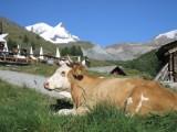 Szlak Jana III Sobieskiego: Chcesz jechać do Szwajcarii? Zgłoś się do gminy