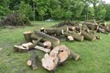 W zrewitalizowanej toruńskiej Glazji znów były wycinane drzewa. Dlaczego? [Zdjęcia]