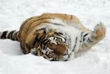 W krakowskim zoo będzie w święta żywa szopka. A teraz zwierzaki można odwiedzać i wspomóc