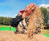 Spadają ceny produktów rolnych. Ile płacą rolnikom w skupie?