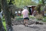 Będą remonty na zielonogórskich Rodzinnych Ogrodach Działkowych? Są pieniądze na odnowę studni, ogrodzeń, instalacji... Sprawdźcie!