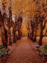 Jesień z niesamowitym pięknem i urokami. Fotogaleria Internautów