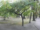 Nasadzenia w Żorach w parku dopiero na wiosnę?