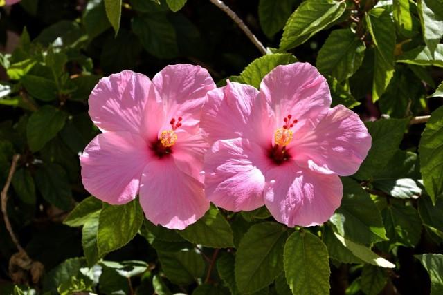 Alergia najczęściej atakuje wiosną, bo właśnie wtedy kwitnie najwięcej roślin.