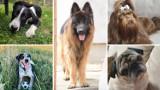 Mega galeria psów z Legnicy i okolic! Takie cudne pieski mieszkają obok nas! Małe, duże, rasowe i kundelki [ZDJĘCIA CZYTELNIKÓW]