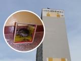 Szczury w bloku przy ulicy Zbiegniewskiej we Włocławku. Mieszkańcy przerażeni [zdjęcia]