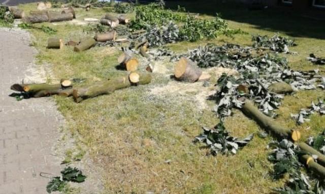 Czytelnik ze Szprotawy jest oburzony wycinką drzew na osiedlu Chrobrego