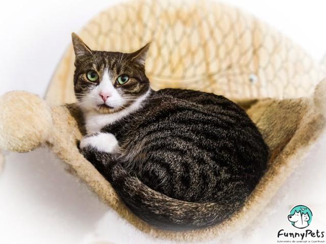 Uratuj koty ze zduńskowolskich fundacji przed kleszczami