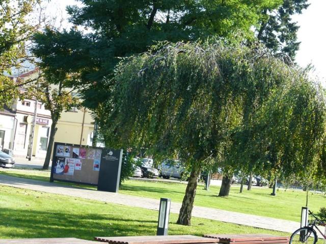 Powstaje miejsko-powiatowy zespół dotyczący zieleni w Zduńskiej Woli. Mieszkańcy są zaproszeni