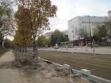 W trakcie remontu  Al. Racławickich uszkodzono drzewa. Upomniano wykonawcę przebudowy drogi