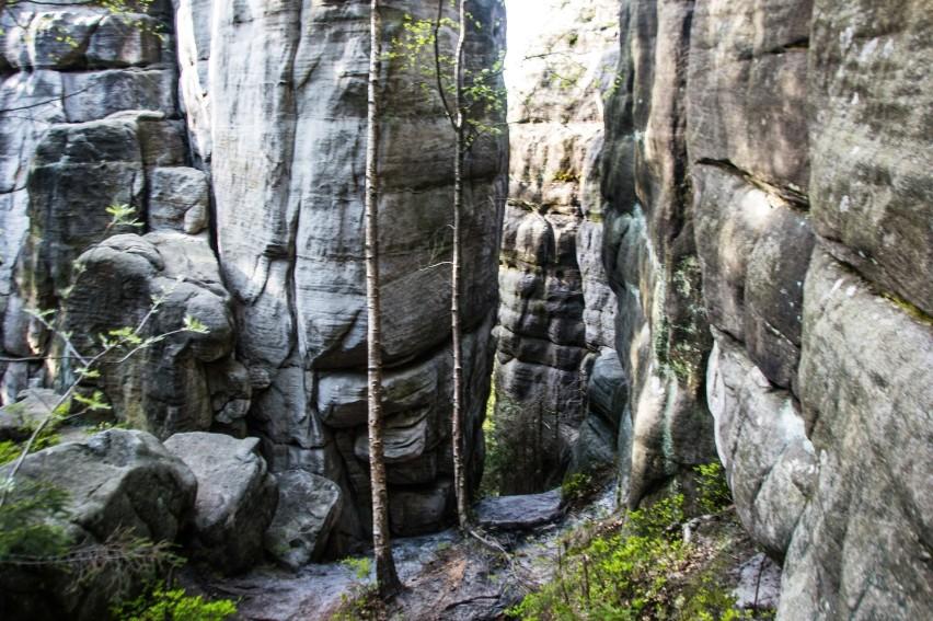 Myślisz, że znasz Góry Stołowe? A widziałeś Białe Skały? Proponujemy wyjątkowy szlak w Parku Narodowym Gór Stołowych