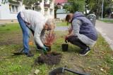 Mieszkańcy pomagają w rewitalizacji podwórek komunalnych położonych w Człuchowie