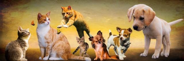Zobacz jakimi zwierzakami, mieszkańcy chwalą się na Instagramie>>>