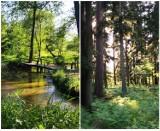 Zjawiskowe rezerwaty przyrody w Lubelskiem. Zobacz zdjęcia Instagramerów!