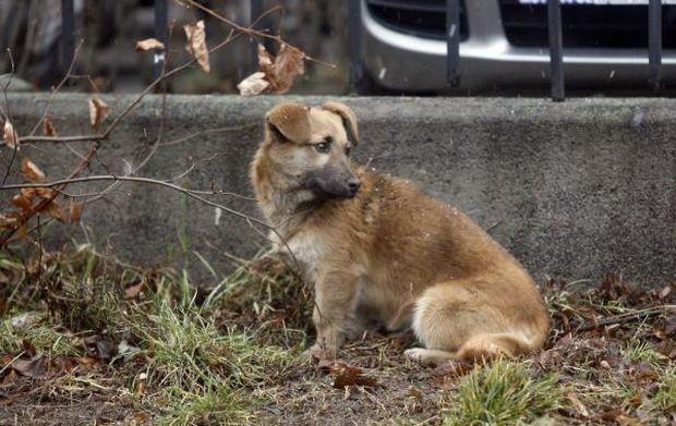 Bezpański pies - zdjęcie ilustracyjne