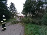 Silny wiatr w powiecie grudziądzkim. Strażacy mieli kilka interwencji