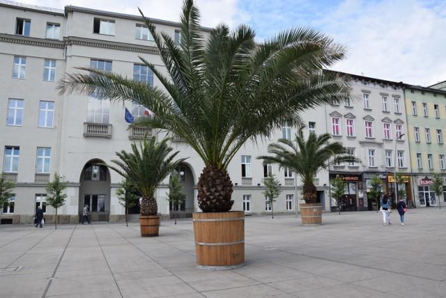 Weekend pełen wydarzeń na rynku w Chorzowie