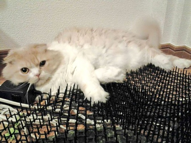 Koty nie zawsze są słodkie. Lubią też zabawy ostrymi narzędziami! [GALERIA]