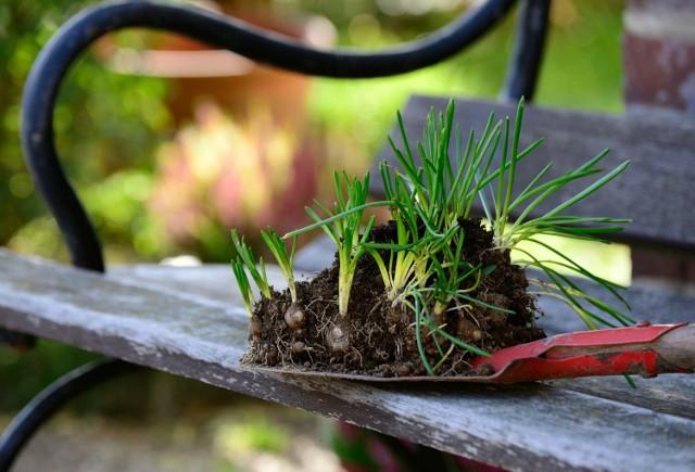 Letni Targ Wymiany Roślin odbędzie się przy Centrum Sportu Szamotuły 20 czerwca