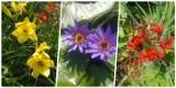 Zobacz piękne kwiaty w Arboretum w Bolestraszycach w powiecie przemyskim [ZDJĘCIA]
