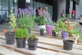 Przynieś roślinę i weź sobie nową. Wiosenna wymiana roślin na Targach Designu w Domu Towarowym Bracia Jabłkowscy