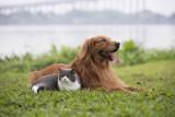 Koniec programu dopłat do kastracji domowych psów i kotów. W gminie Koluszki zainteresowanie nim było duże