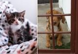 Nie kupuj, adoptuj bezdomnego zwierzaka ze schroniska!