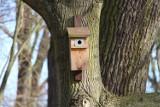 W gminie Pruszcz Gdański wiosenne porządki - cięcia drzew, czyszczenie budek dla ptaków