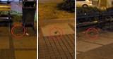 """Szczury w centrum Częstochowy! Grasują po alei NMP - jest FILM. Miasto: """"kilka zgłoszeń nasilonej obecności"""""""