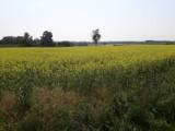 Ekologiczna inicjatywa w gminie Witonia. Powstała łąka kwietna