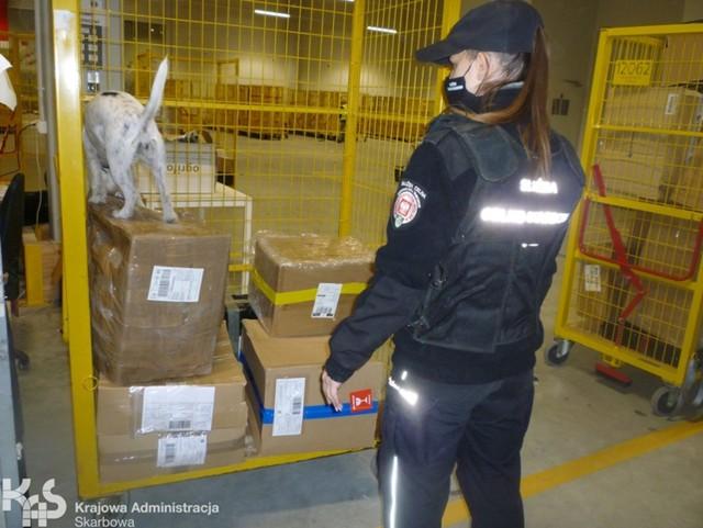 Dzięki skutecznej służbie psów z kujawsko-pomorskiej KAS, ilość ujawnionej tytoniowej kontrabandy w 2020 roku przekroczy prawdopodobnie 1 tonę.