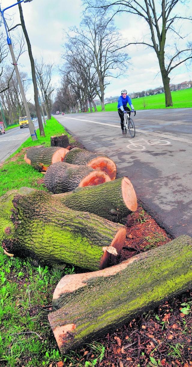 Mieszkańcy Krakowa nie mogą przeboleć wycinki