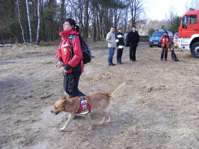 Wielu zawodowych strażaków również po pracy udziela się w  OSP.  Czym się wówczas zajmują? na przykład układaniem psów do poszukiwań ludzi zaginionych w wyniku katastrof budowlanych bądź też osób, które zgubiły się w lasach