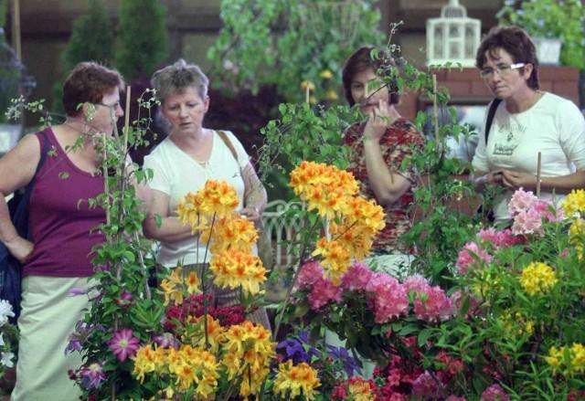 Kwiaty w Kapeluszu można podziwiać do poniedziałku