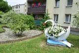 Pięknie przed tym wodzisławskim blokiem! Setki kwiatów, kolorowe donice i łabędzie z opon - zobacz ZDJĘCIA