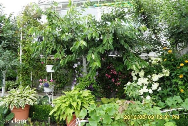 Działka rekreacyjno-ogrodnicza, na której można spokojnie i bezpiecznie spędzać wolny czas, mieszkać od kwietnia do października oraz prowadzić eko-uprawy. LINK DO OFERTY