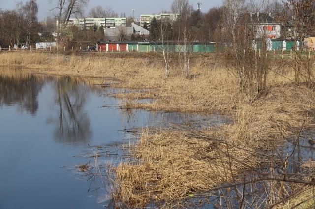 Trwa remediacja stawu Kalina w Świętochłowicach