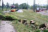 Straty po burzy w Łodzi. Skutki nawałnicy w Łodzi 14 lipca 2021 roku. Jak wygląda usuwanie szkód?  ZDJĘCIA