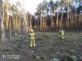 Tydzień straży pożarnej w Zduńskiej Woli. Jakie były zdarzenia?