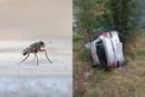 Włodawa: 23-latka spowodowała kolizję, bo do auta wleciała mucha