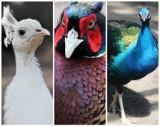 KROTOSZYN: Ptasia woliera już cieszy oko mieszkańców i odwiedzających Park Miejski [ZDJĘCIA]