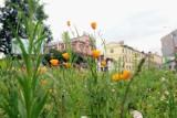 Lublin najbardziej ekologicznym miastem w Polsce