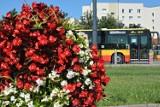 Warszawskie pętle autobusowe wypięknieją. Będą ozdabiane kolorowymi kwiatami