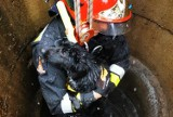 Pies wpadł do studni. Piękna akcja strażaków z OSP Białośliwie [zdjęcia]