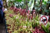 W Łańcucie odbędzie się Festiwal Roślin Owadożernych