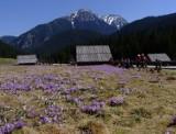 Tatry. Zamknęli dla turystów szlaki w rejonie Doliny Chochołowskiej