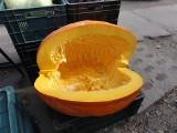 Rekordowe warzywa na Pomorzu. Dynia z Banina - przyślij także zdjęcie swojego warzywa! [ZDJĘCIA]