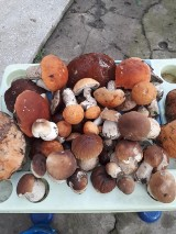 W powiecie sławieńskim wrzesień sprzyja grzybiarzom ZDJĘCIA