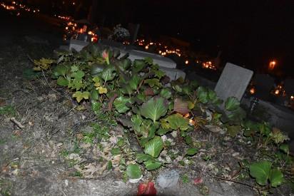 Wrzesińskie cmentarze nocą wyglądają magicznie [FOTO]