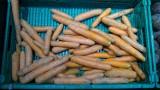 Klient pilskiego Carrefoura oburzony marchewką z czarnymi plamami. Sieć wyjaśnia